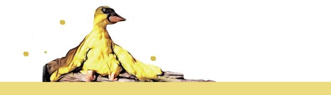 La berceuse enchantée canard